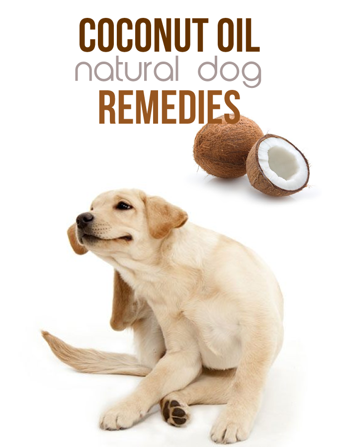 Coconut Oil Natural Dog Remedies